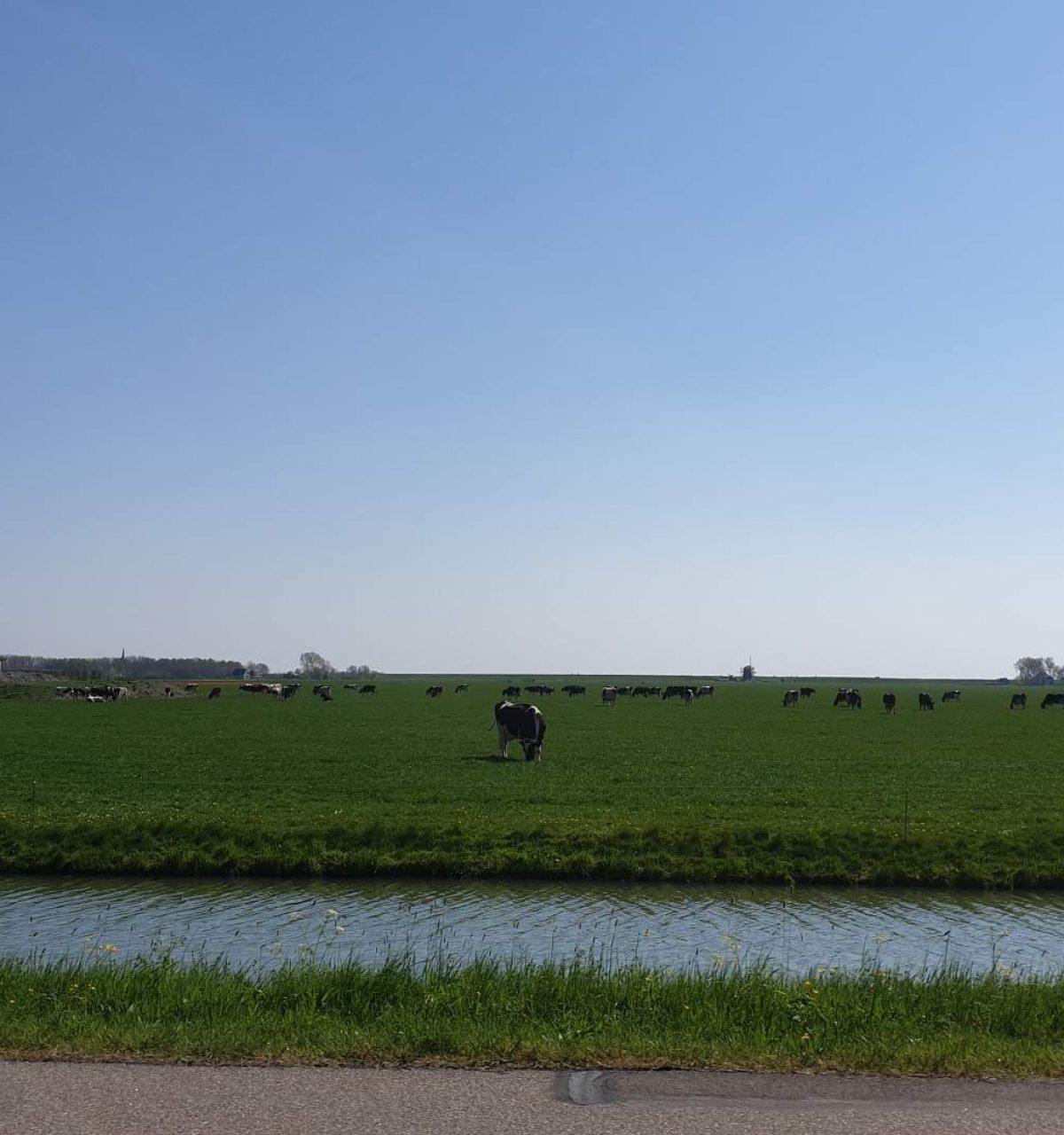 holland boven amsterdam natuur noord holland westwoud-g27