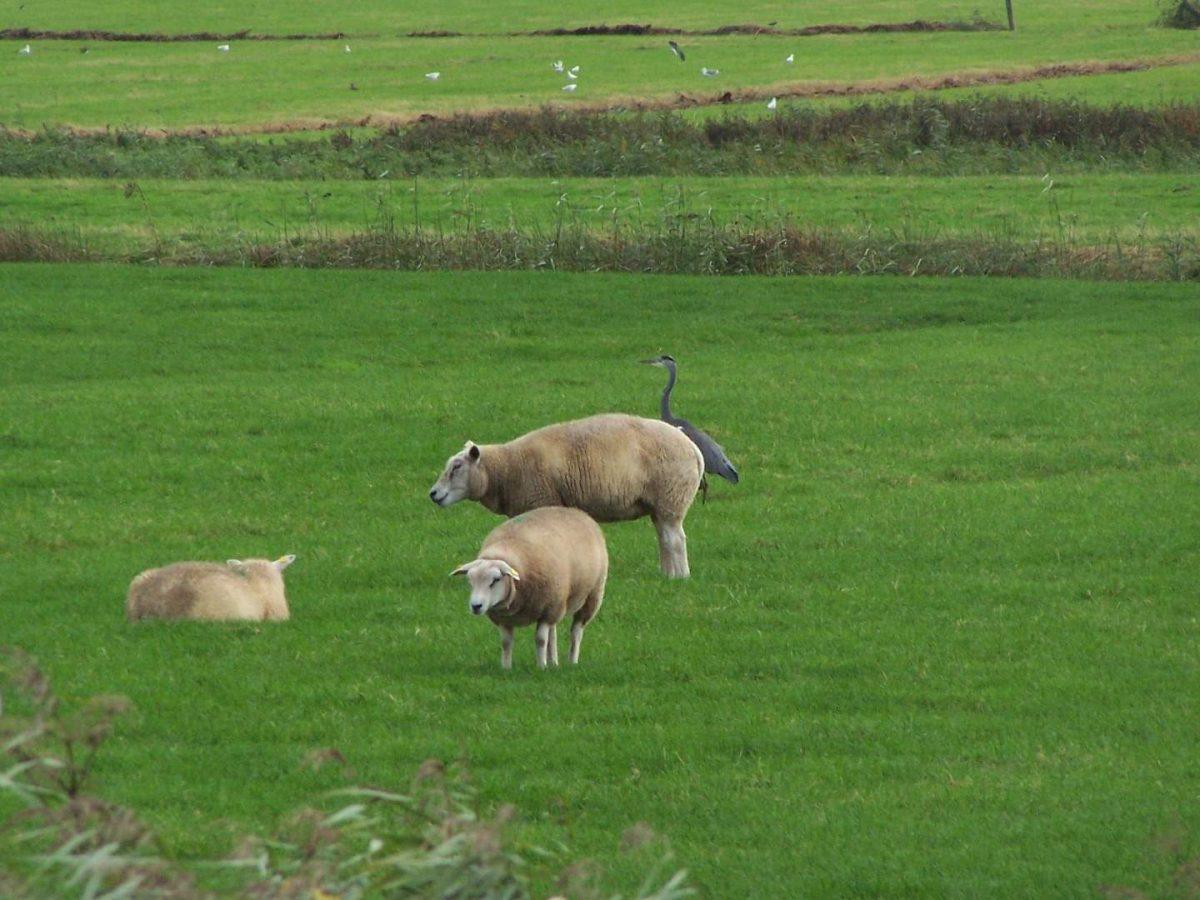 westwoud natuur in noord holland waterrijke omgeving01