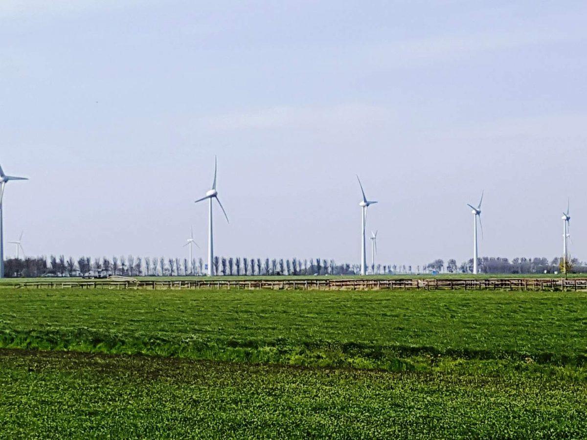 westwoud natuur in noord holland waterrijke omgeving04