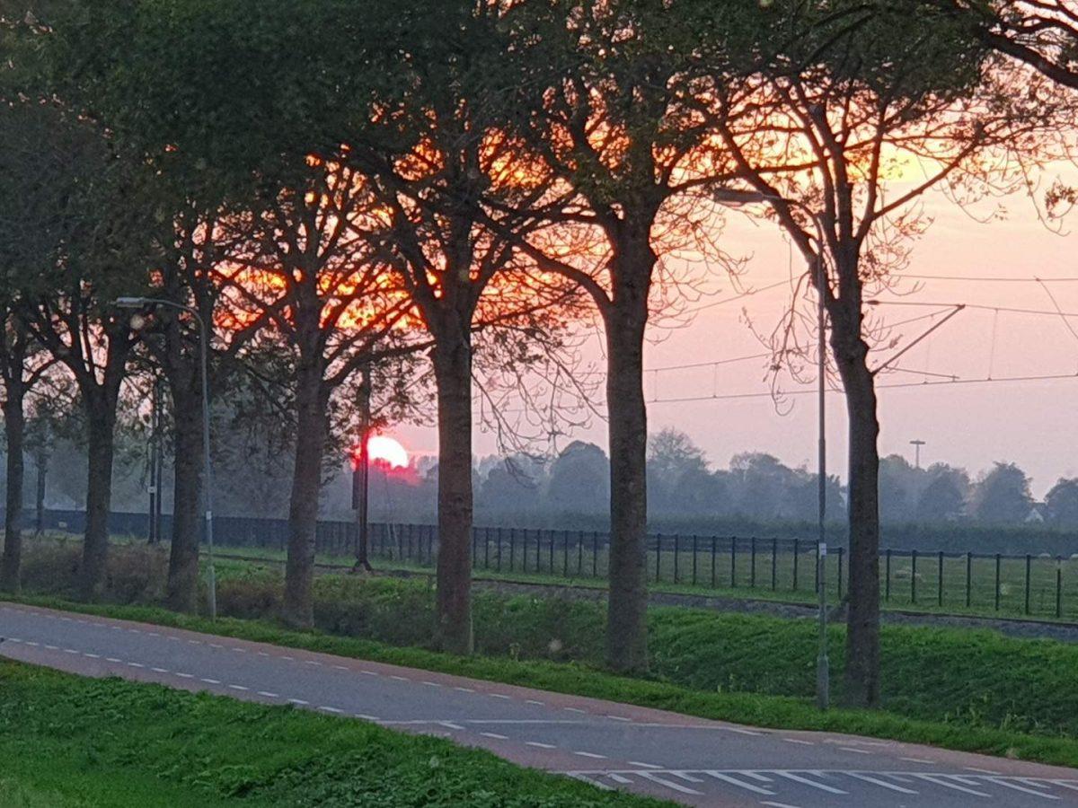 westwoud natuur in noord holland waterrijke omgeving10