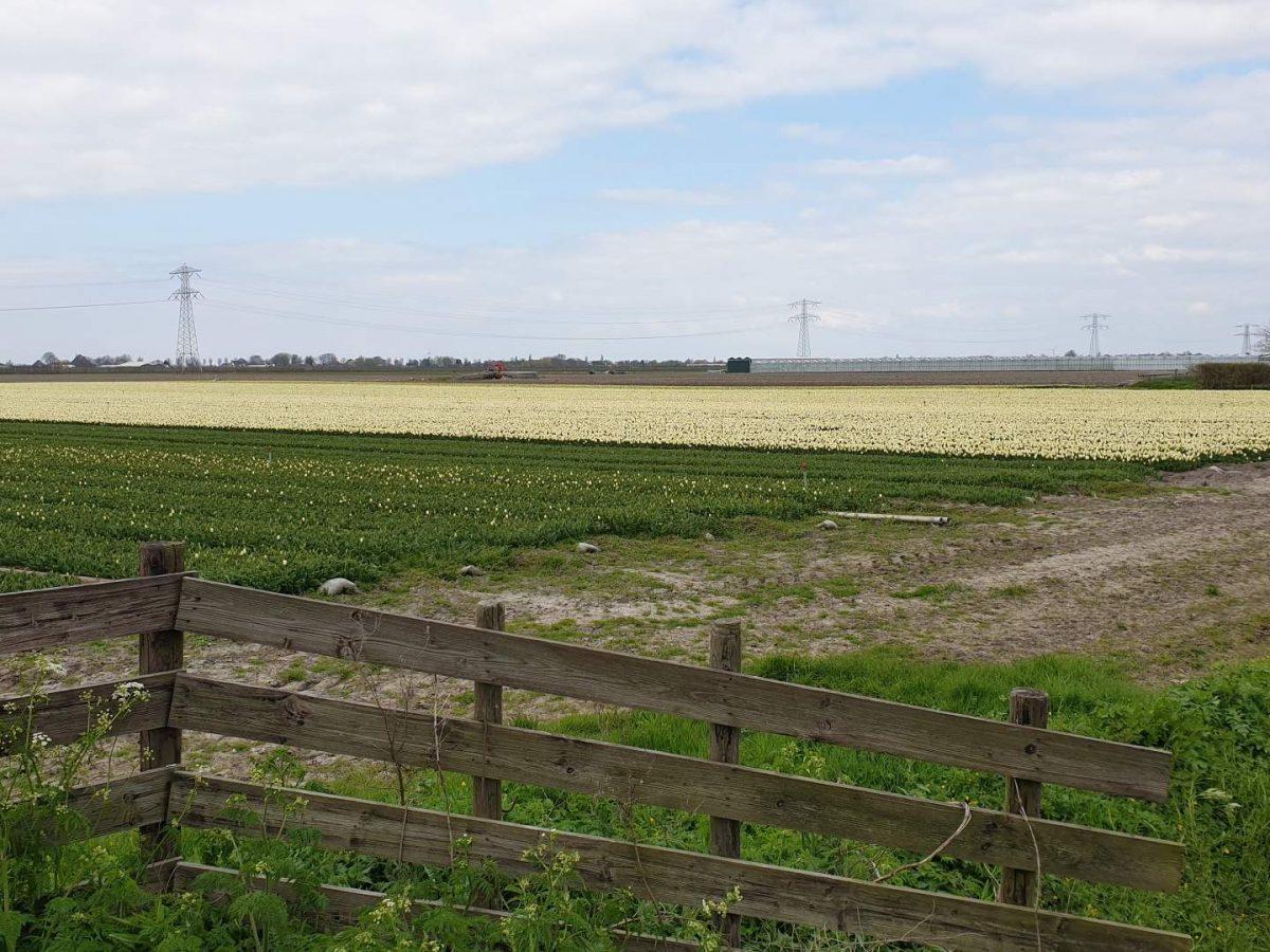 westwoud natuur in noord holland waterrijke omgeving20