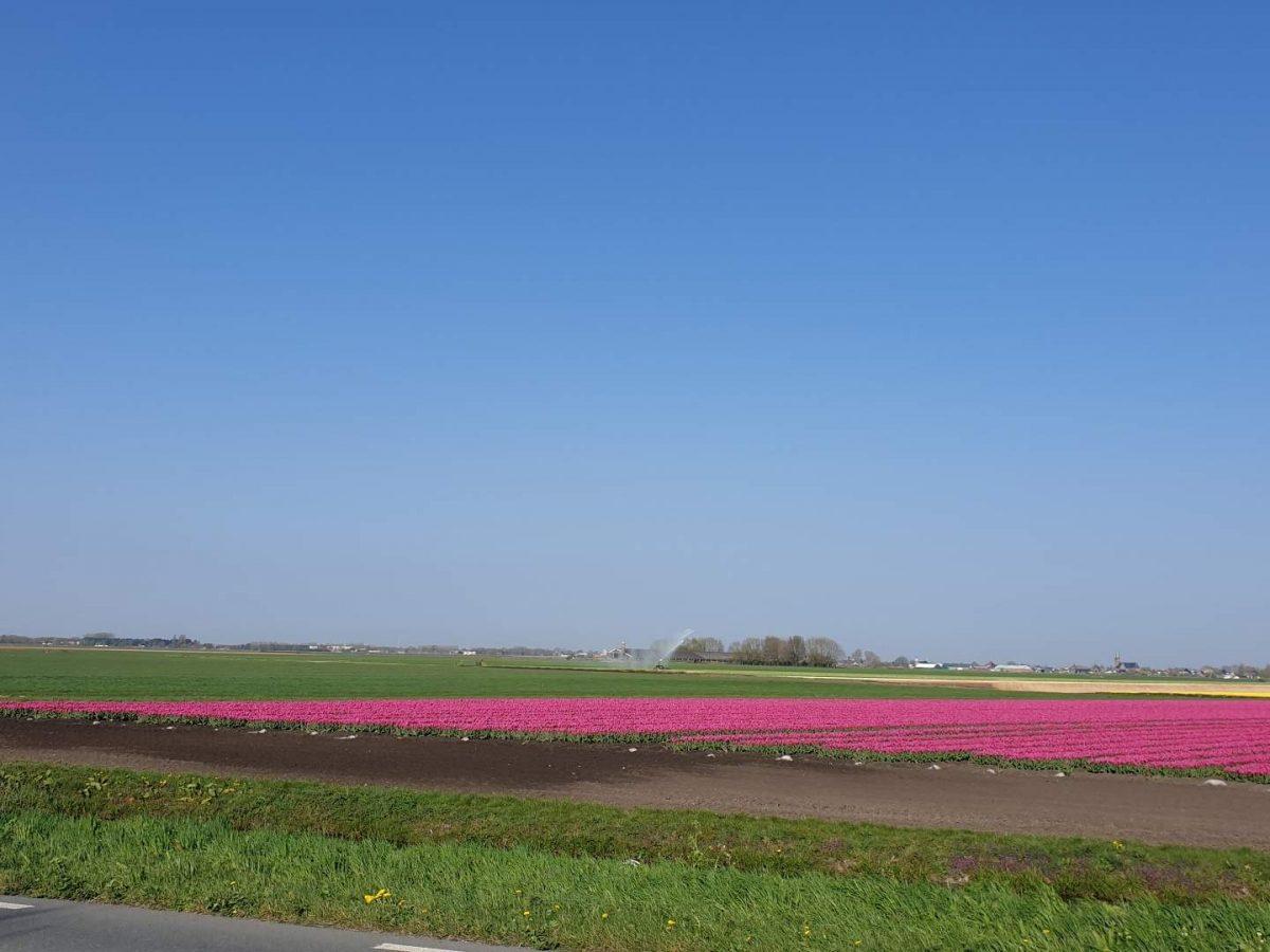 westwoud natuur in noord holland waterrijke omgeving22
