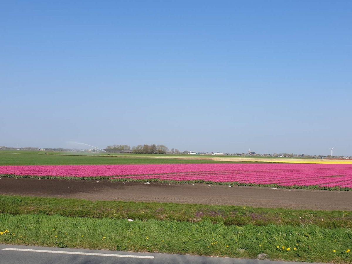 westwoud natuur in noord holland waterrijke omgeving23