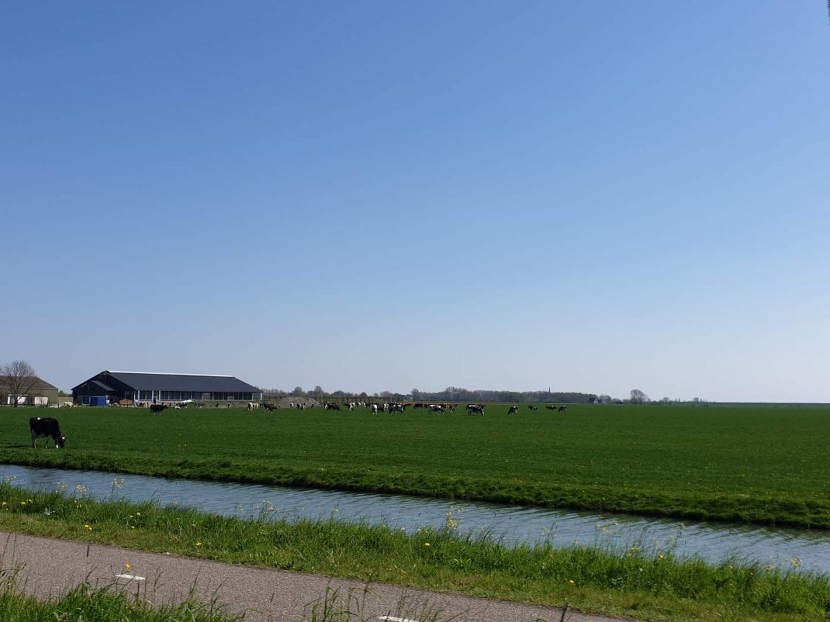 westwoud natuur in noord holland waterrijke omgeving25