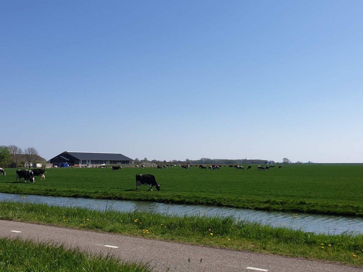 westwoud natuur in noord holland waterrijke omgeving26
