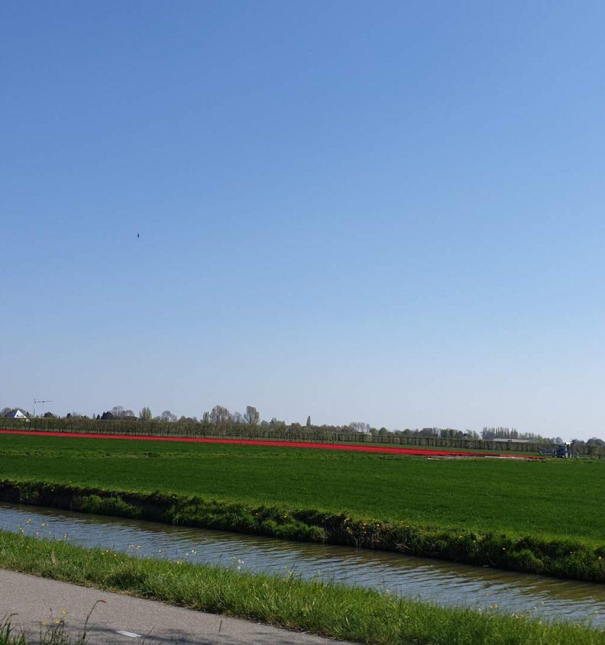 westwoud natuur in noord holland waterrijke omgeving29