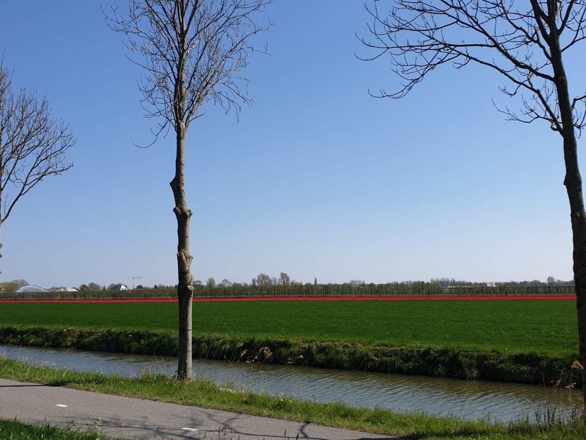 westwoud natuur in noord holland waterrijke omgeving30