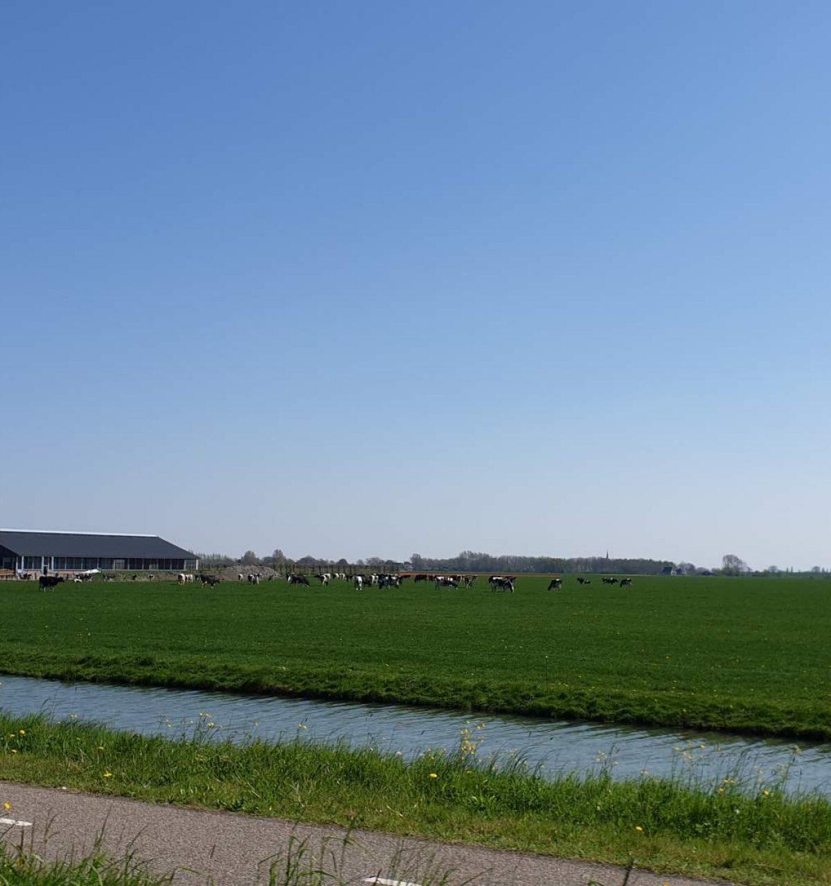 westwoud omgeving natuur noord holland boven amsterdam-25