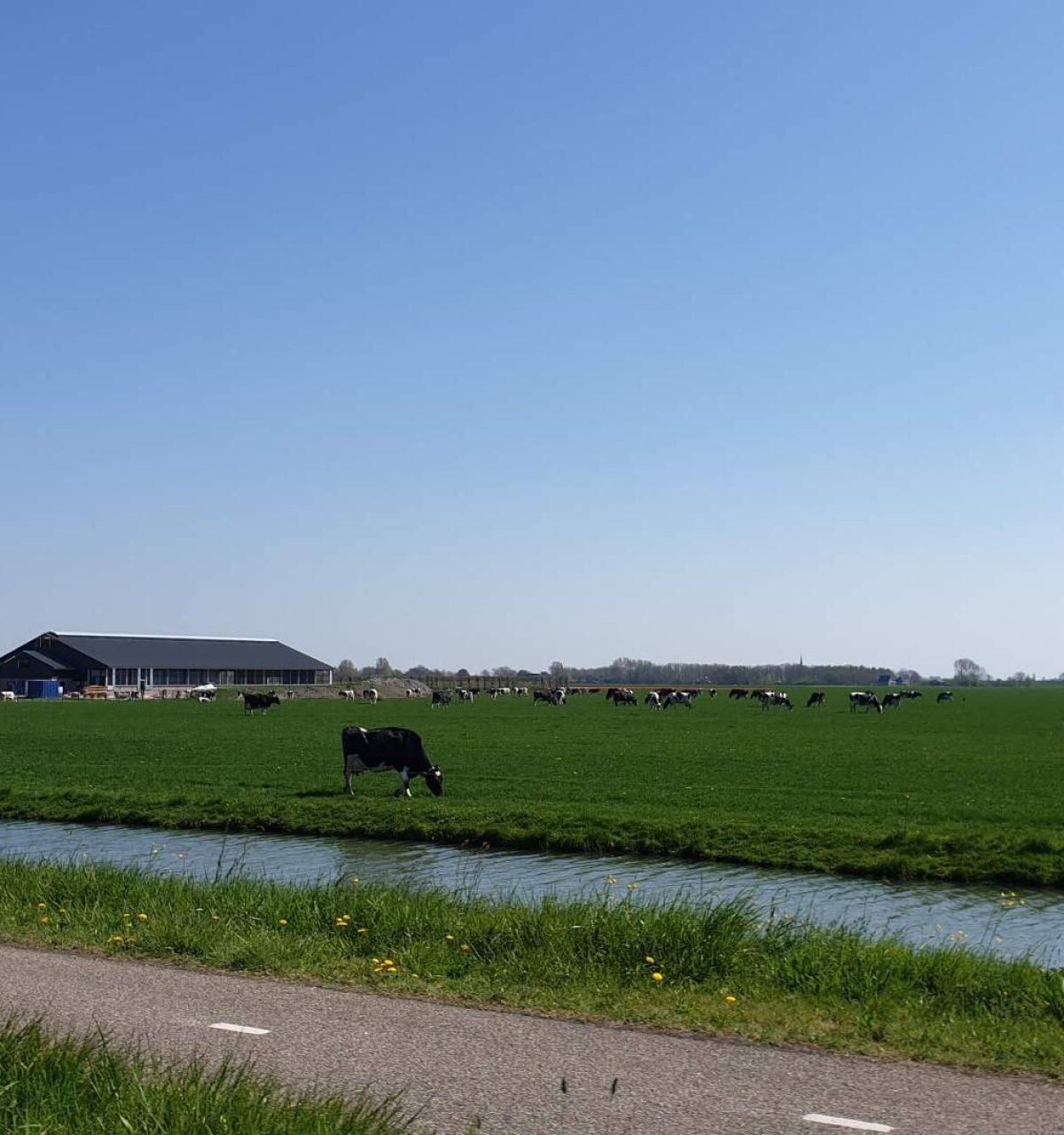westwoud omgeving noord holland on road to amsterdam-26